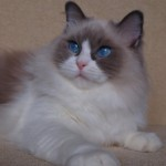 Profile picture of Balletcar